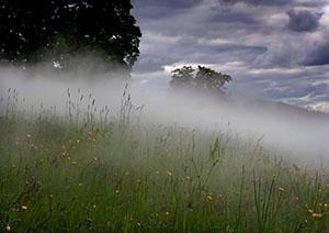 сгущение тумана вечером на участке